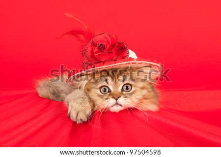 Cute kitten with red hat on red background - stock photo