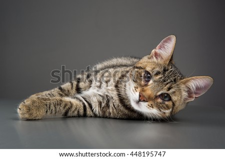 Cute Kitten with Third Eyelid Showing (Protrusion of Nictitating Membrane)