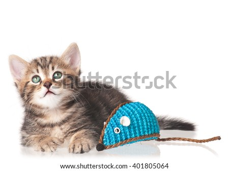 Cute kitten with toy mouse isolated on white background - stock photo