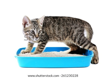 Cute kitten with tray of sand isolated on white - stock photo