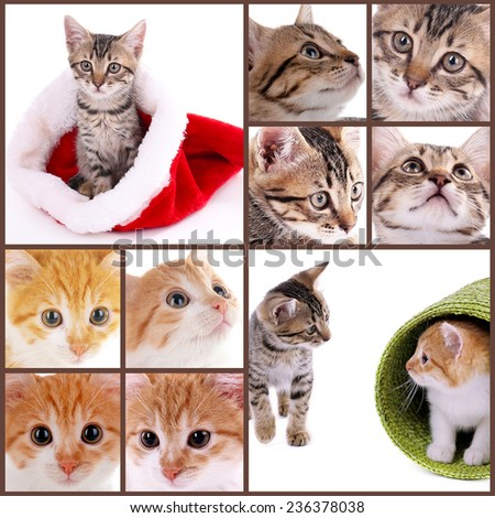 Cute kittens collage - stock photo