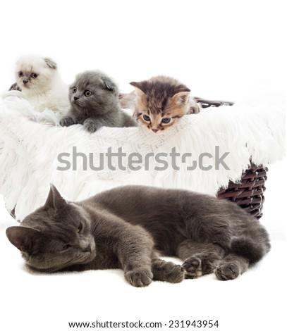 cute kittens in a straw basket - stock photo