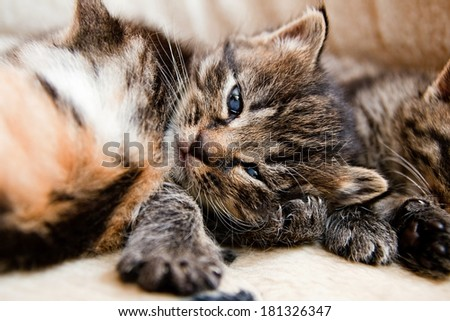 cute kittens lies together in the letty