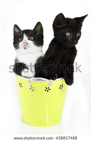 Cute kittens sitting inside in pastel containers on white background - stock photo