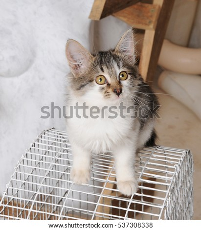 Cute kitty sitting on a bird cage in vintage interior