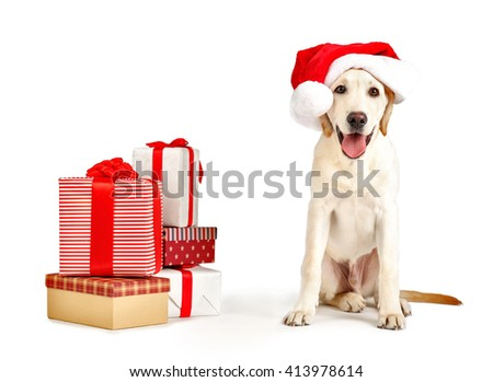 Cute Labrador dog with gift boxes isolated on white - stock photo