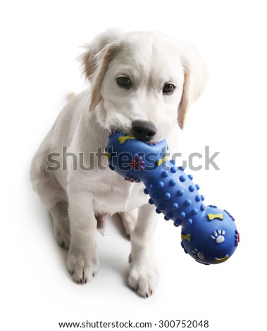 Cute Labrador dog with rubber toy isolated on white - stock photo