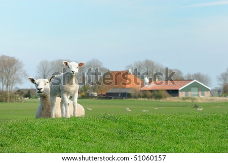 Cute lamb and mother sheep in spring, Friesland The Netherlands - stock photo