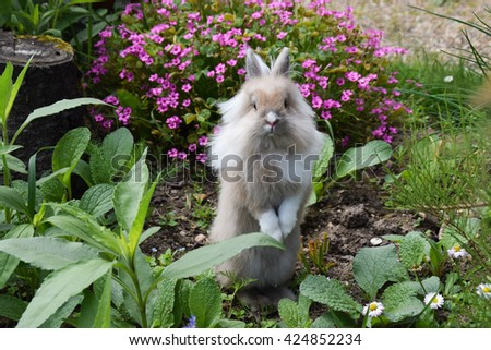 Cute Lionhead bunny rabbit playing in the garden And flowers background