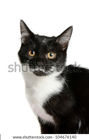 Cute little black and white kitten isolated on white background - stock photo