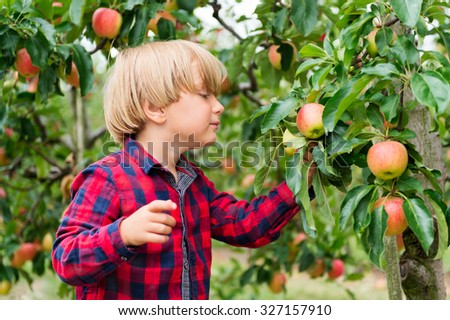 Cute little blond boy playing in apple orchard in early autumn - stock photo