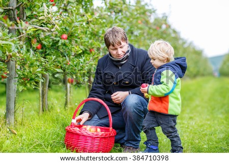 Cute little blond toddler boy  his young father picking red apples in fruit orchard. Family having fun with gardening and harvesting. Lifestyle, organic food, family concept. - stock photo