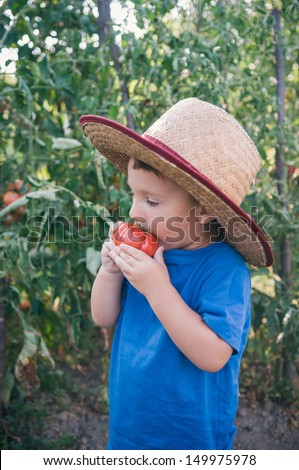 Cute little boy eating tomato  - stock photo