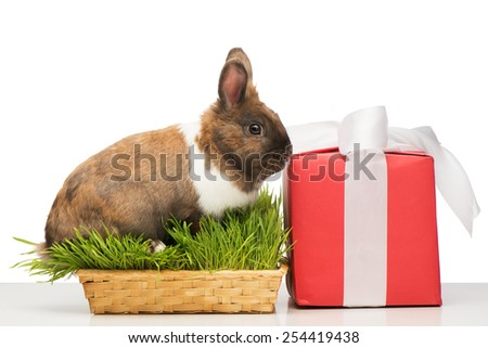Cute little brown bunny sitting in grass near present box with white ribbon. Concept for holidays - stock photo