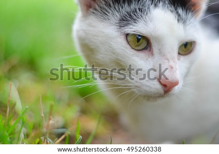 Cute little cat- close up portrait