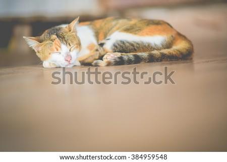 Cute little cat nap - stock photo