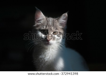 cute little cat on a black background