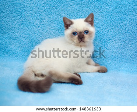 Cute little cat relaxing on a blue blanket - stock photo