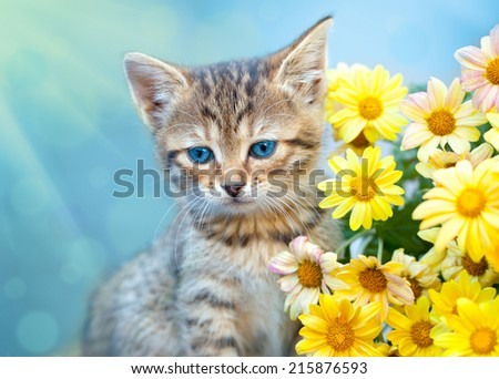 Cute little cat sitting near yellow flowers