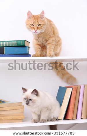 Cute little cats on shelf with books on light background