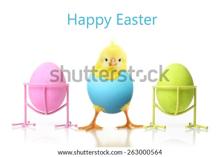 Cute little chicken and Easter eggs isolated on white background - stock photo