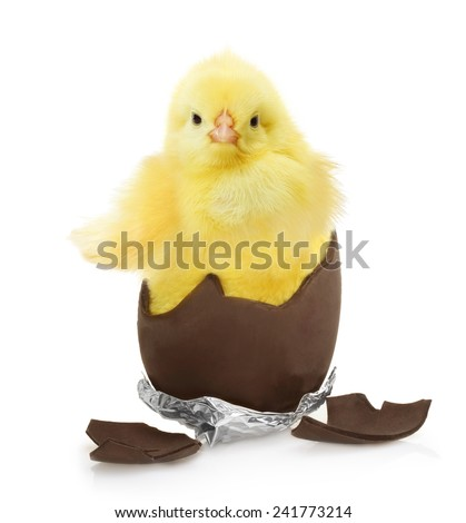 Cute little chicken coming out of the chocolate egg isolated on white background - stock photo