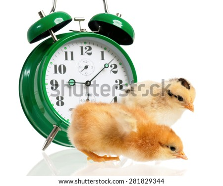 Cute little chickens with clock isolated on white background - stock photo