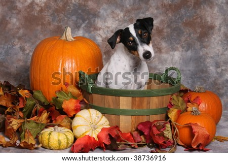 Cute little dog in autumn scene - stock photo