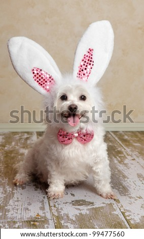 Cute little dog wearing bunny ears and matching sequin bow tie in a rustic setting. Suitable for easter or fancy dress halloween. - stock photo