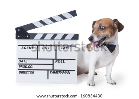 cute little dog with accessory bow tie and white collar sits near the movie clapper with surprise looks. White background. Studio shot. - stock photo