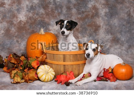 Cute little dogs in autumn scene - stock photo