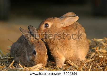 cute little easter bunnies