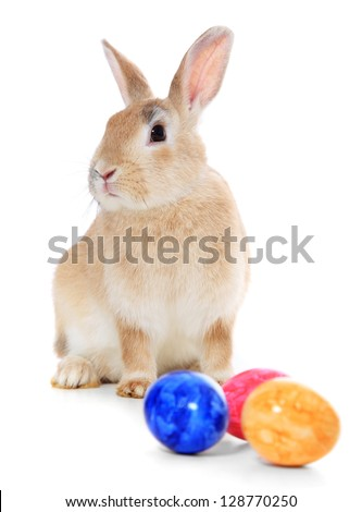 Cute little easter bunny. All on white background. - stock photo