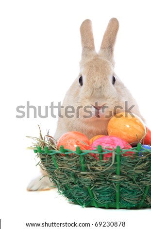 Cute little easter bunny with colored eggs. All on white background. - stock photo