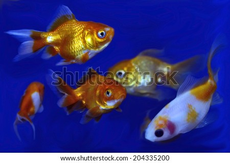 Stock images royalty free images vectors shutterstock for Cute freshwater fish