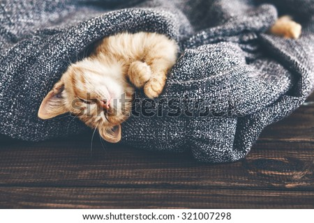 Cute little ginger kitten is sleeping in soft blanket on wooden floor - stock photo