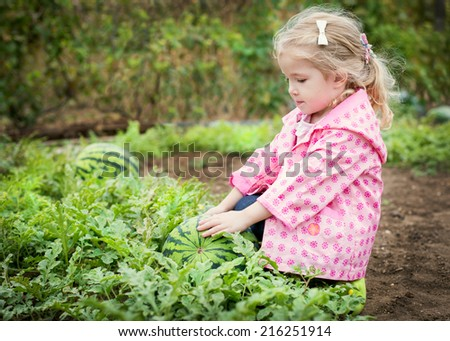 cute little girl chooses a watermelon in the garden - stock photo