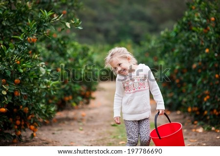Cute little girl looking happy on a mandarin farm ready to pick some mandarins - stock photo