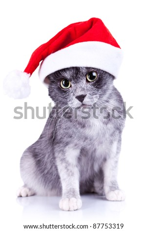 cute little gray cat wearing a santa hat looking to the camera over white background - stock photo
