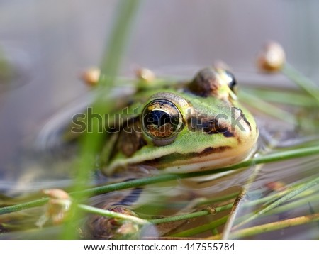 Cute little green frog close up