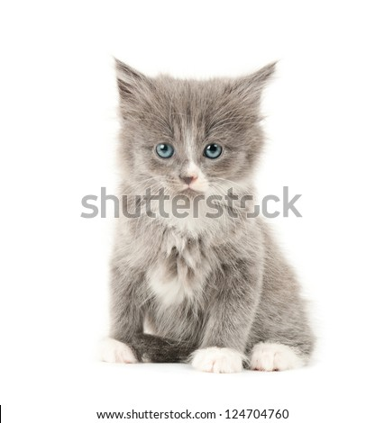 Cute little grey and white fluffy kitten isolated on white background - stock photo
