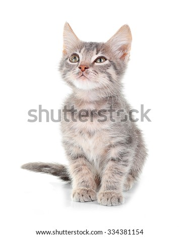 Cute little grey kitten, isolated on white