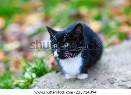Cute little homeless kitten - stock photo