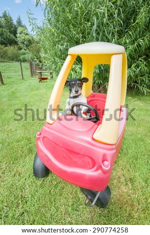 cute little jack russell driving a plastic toy buggy - stock photo