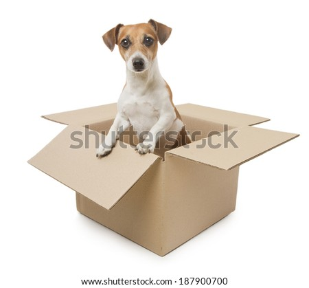 Cute little Jack Russell terrier dog looks out of the filling cardboard boxes. Sending for the weakest. White background. Studio shot - stock photo