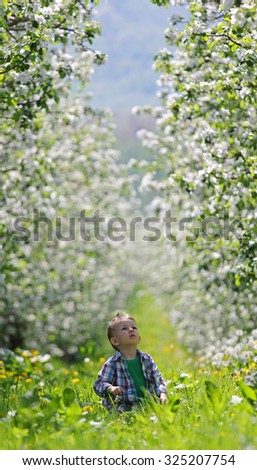 Cute little kid discovers the nature in a orchard full of flowers - stock photo