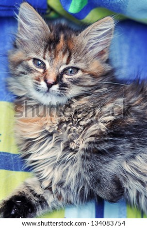Cute little kitten - stock photo