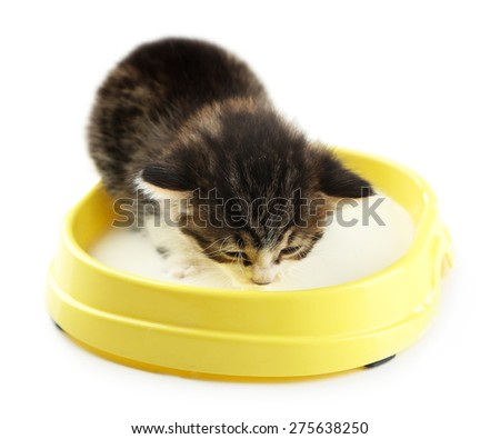 Cute little kitten drinks milk, isolated white - stock photo