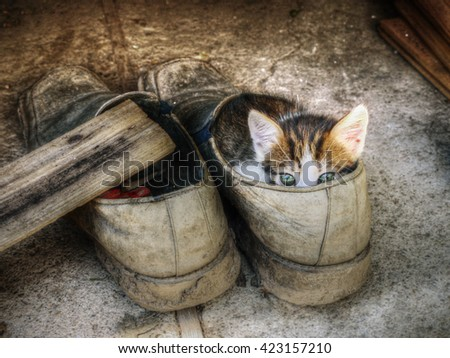 Cute little kitten hiding in the old shoe over grey background - stock photo