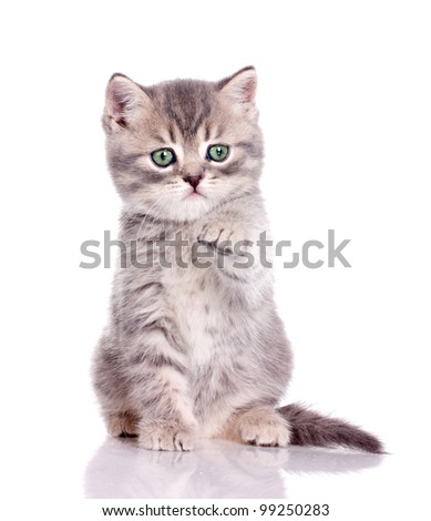 cute little kitten holding out its paw isolated on white